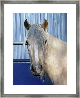 Horse For Sale  Framed Print by Pamela Patch