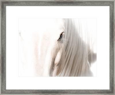 Horse Glow Framed Print by Toni Thomas