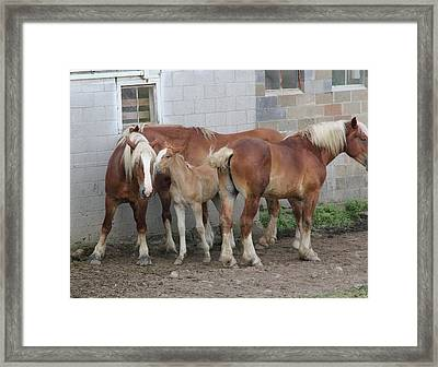 Horse Gossip Framed Print by Donna Bosela