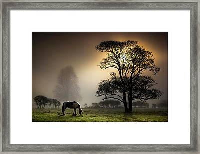Horse Grazing In Field Framed Print by Land and Light