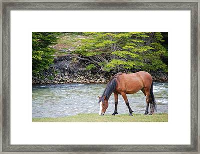 Horse Grazing Framed Print by Thanks for choosing my photos.