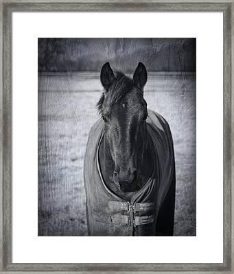 Horse Grunge Framed Print by Kathy Clark