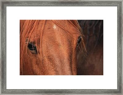 Horse Hide Framed Print