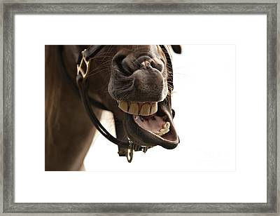Horse Humour Framed Print by Heather Swan