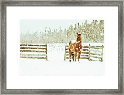 Horse In A Snowstorm Framed Print by Roberta Murray - Uncommon Depth