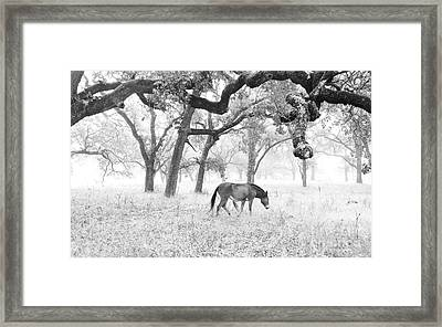 Framed Print featuring the photograph Horse In Foggy Field Of Oaks by CML Brown