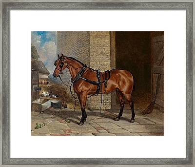 Horse In Harness Framed Print