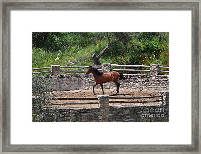 Horse In The Meadow Ring Framed Print by Mary Machare