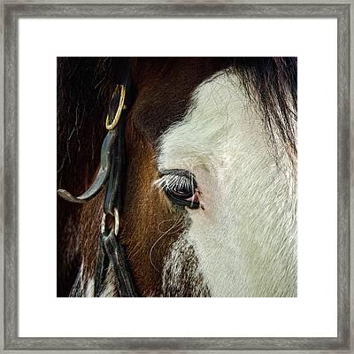 Horse Framed Print by Jana Smith