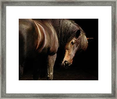 Horse Looking Over Shoulder Framed Print by Anne Louise MacDonald of Hug a Horse Farm