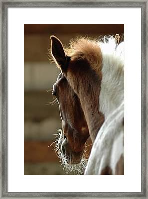 Horse Framed Print by Lynn Koenig