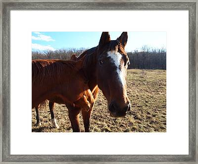 Horse Neck Framed Print by Robert Margetts
