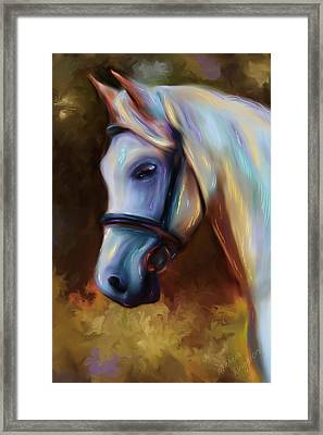 Horse Of Colour Framed Print