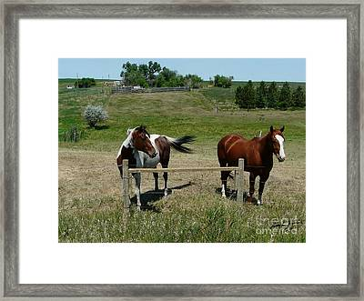 Horse On A Warm Day Framed Print by Bobbylee Farrier