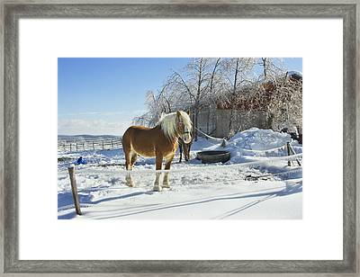 Horse On Maine Farm After Snow And Ice Storm Photograph Framed Print by Keith Webber Jr