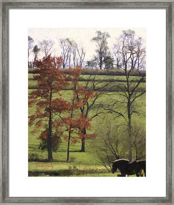 Horse On The Pasture Framed Print by Trish Tritz