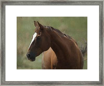 Horse Painterly Framed Print by Ernie Echols