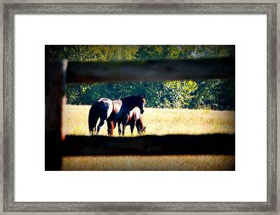 Framed Print featuring the photograph Horse Photography by Peggy Franz
