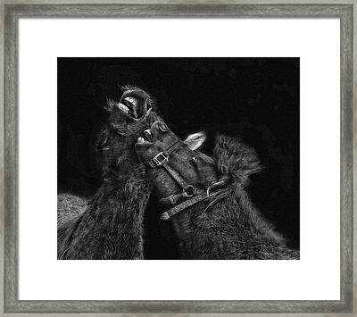 Horse Play Framed Print by Pat Abbott