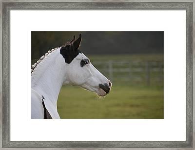 Horse Portrait Framed Print by Ralf Kaiser