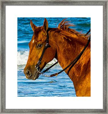 Horse Portrait  Framed Print by Shannon Harrington
