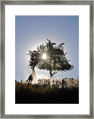 Framed Print featuring the photograph Horse Reaching For Apples by Michael Dohnalek