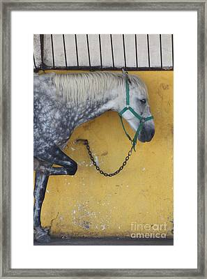 Horse  Framed Print by Rogerio Mariani