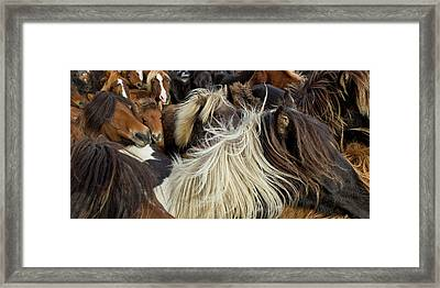 Horse Round-up Framed Print by Arctic-Images
