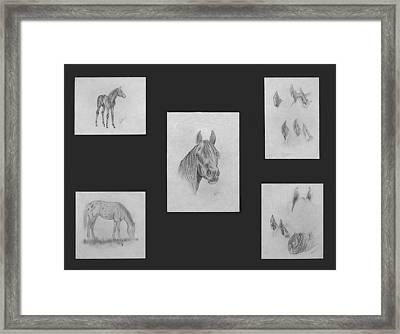 Horse Study Framed Print by Alethea McKee