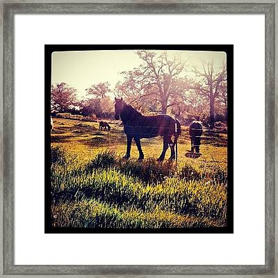 #horse #sunshine #silhouette #sunrise Framed Print by Bryan P
