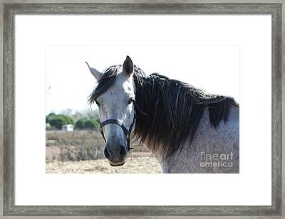 Horse With A Look  Framed Print