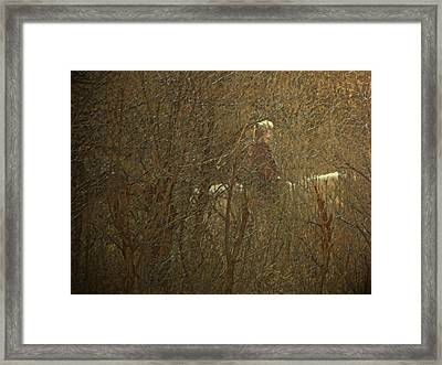 Horseback In The Garden Framed Print by Lenore Senior