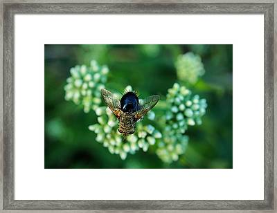 Horsefly No Bother Me Framed Print by Beth Akerman