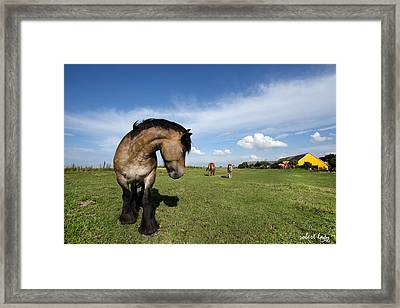 Horsepower Framed Print by Robert Lacy