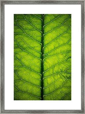Horseradish Leaf Framed Print
