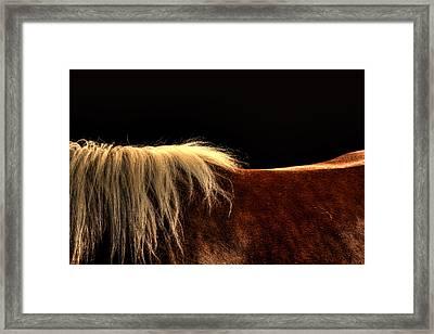 Horses Back Framed Print by Gary Smith