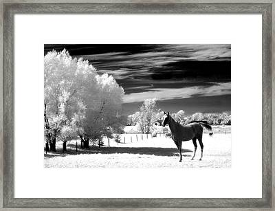 Horses Black White Surreal Nature Landscape Framed Print by Kathy Fornal