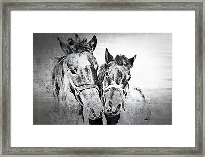 Horses By The Road Framed Print by Kathy Jennings