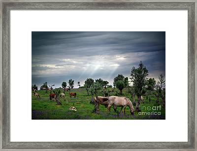 Horses Eating Framed Print by Carlos Caetano