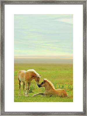 Horses Foals In Field Framed Print