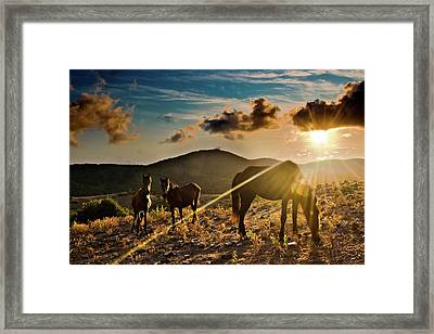 Horses Grazing At Sunset Framed Print by Finasteride