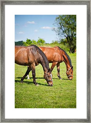 Horses Grazing Framed Print by Marta Holka