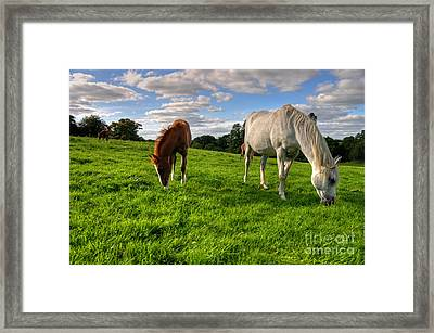 Horses Grazing Framed Print by Rob Hawkins
