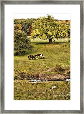 Horses Framed Print by HD Connelly