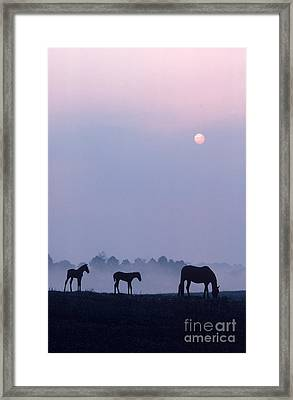 Horses In Kentucky Framed Print by Frederica Georgia and Photo Researchers