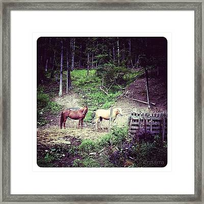 Horses In The Hills Framed Print