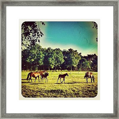 #horses In The Morning Framed Print