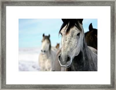 Horses In The Snow Framed Print by Lori Andrews