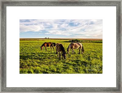 Horses In The Sunset Framed Print by Bodo Herold
