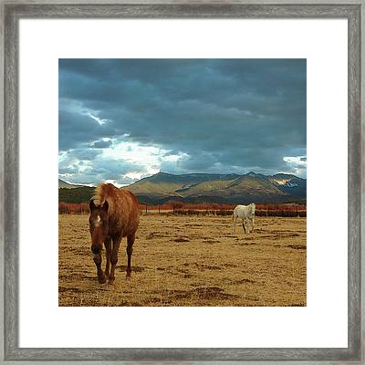 Horses In Winter Landscape  Truchas, New Mexico Framed Print by Mary Hockenbery
